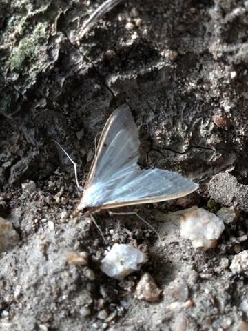 冬の蛾.jpg